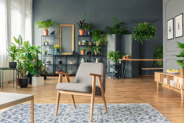 indoor air purifying plants in the living room