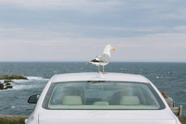 bird poop on the car