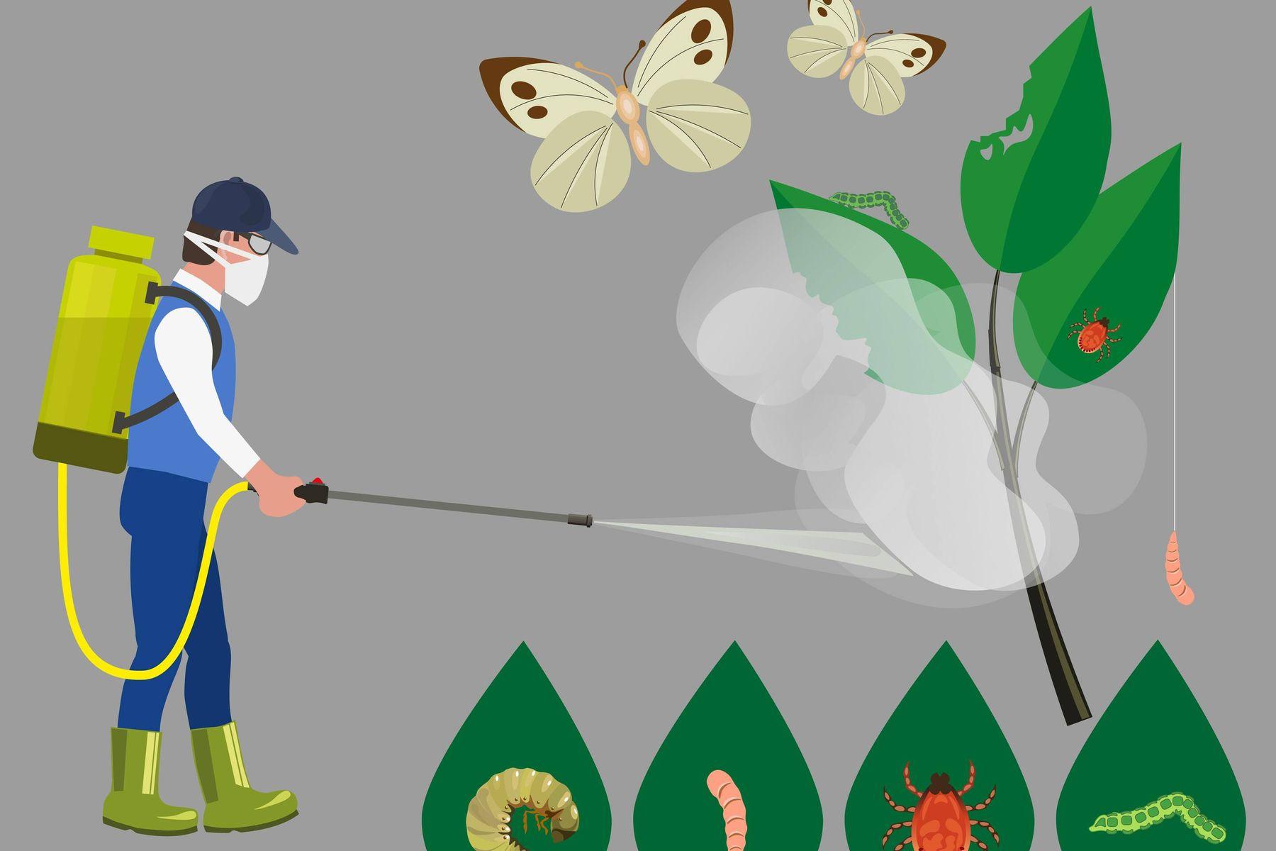 5 lọai thuốc diệt côn trùng an toàn, hiệu quả nhất và những điều cần lưu ý